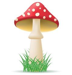 mushroom amanita vector image vector image