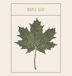 High detailed maple leaf drawn sketch vector