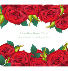 red roses flower invitation card delicate vector image