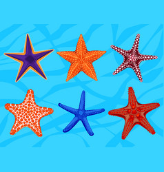 Set of colourful realistic starfishes underwater vector