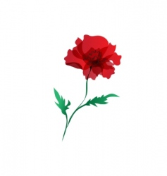 Red poppy isolated over white vector