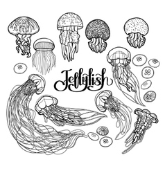 Jellyfish in line art style vector