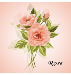 Beautiful bouquet of roses isolated on white vector