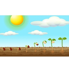Growing plant from seed in the ground vector image