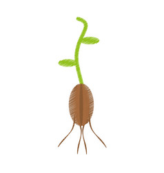 Drawing plant grow flourishes natural vector