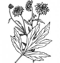 plant rudbeckia vector image