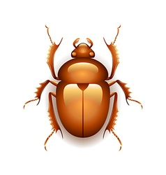 Egyptian scarab beetle isolated on white vector