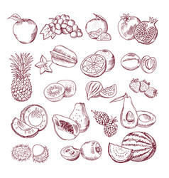 fresh and juicy fruits hand drawn vector image