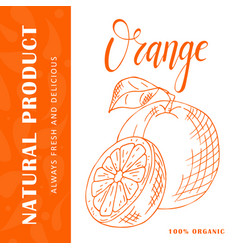 Fruit element of orange hand drawn icon vector