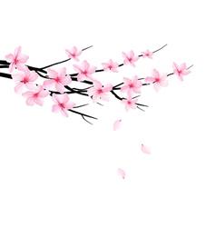 Spring background with blossom brunch of sakura vector