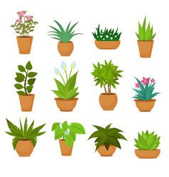 Indoor and outdoor landscape garden potted plants vector