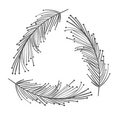 rustic feathers decoration design vector image vector image