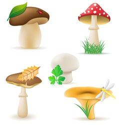 Set icons mushrooms vector