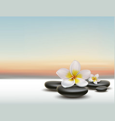 Plumeria with spa stones vector