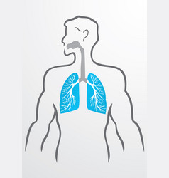 Lungs and human body - vector