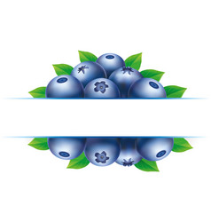 Background blueberry and place for text vector