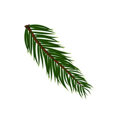 Naturalistic colorful fir branch vector