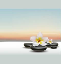 Plumeria with spa stones vector