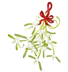 Christmas mistletoe vector image