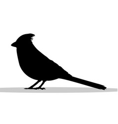 cardinal bird black silhouette animal vector image