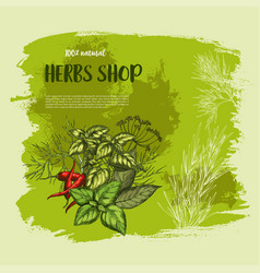 Poster of spices and herbs for shop vector