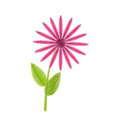 Drawing daisy flowers bunch flora vector