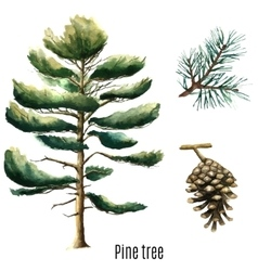 Pine tree watercolor vector image vector image