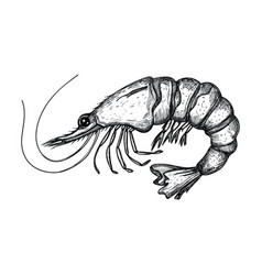 Shrimp hand drawn isolated icon vector