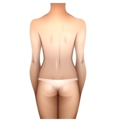 European women body vector
