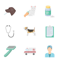 vet clinic treatment of sick animals hospital vector image