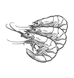 sketch cartoon sea lobster isolated vector image