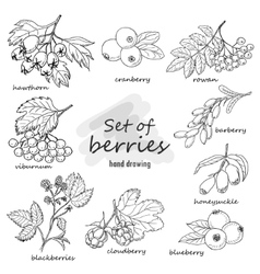 Set of forest berries vector