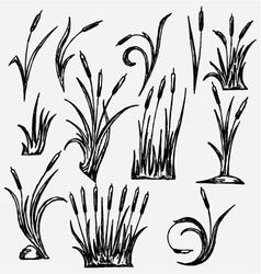 Reeds vector image