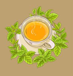 Cup of melissa tea vector