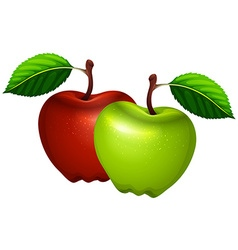 Fresh green and red apples vector image vector image