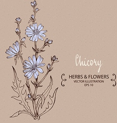 Blue chicory plant vector