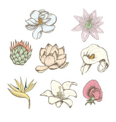 Colored drawing botanical exotic flowers set vector
