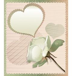 White rose and heart vector