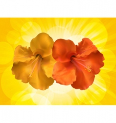 hibiscus flowers and yellow background vector image