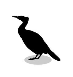 cormorant bird black silhouette animal vector image vector image