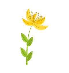 drawing yellow lily flower natural vector image