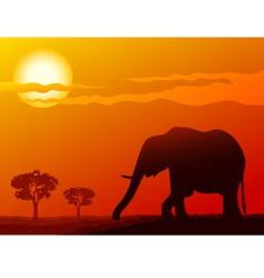Elephant at sunset vector