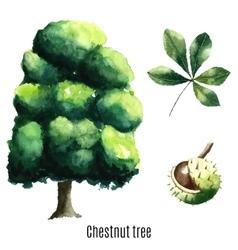 Chestnut tree watercolor vector