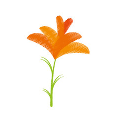 Drawing freesia flower spring natural vector