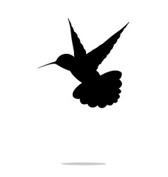 hummingbird black silhouette colibri bird animal vector image