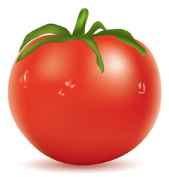 tomato with water drops vector image