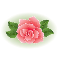 rose with leaves vector image vector image