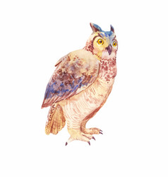 Watercolor brown owl or owl of a seated bird vector