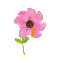 Drawing geranium flower season spring vector