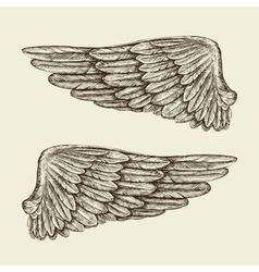 Hand drawn vintage wings sketch vector